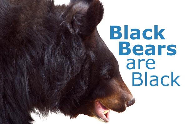 Black Bears are Black