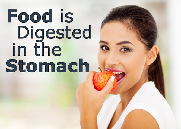 Food is Digested in the Stomach