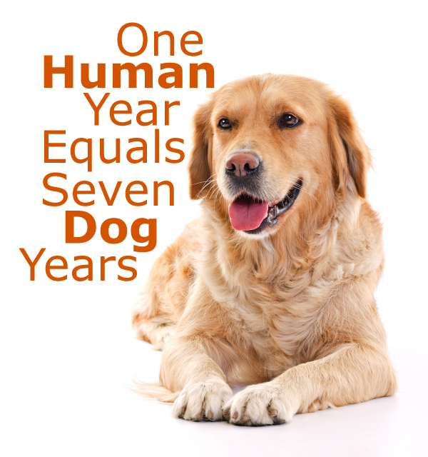 One Human Year Equals Seven Dog Years