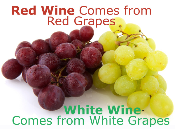 Red Wine Comes from Red Grapes, White Wine Comes from White Grapes