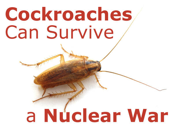 Cockroaches Can Survive a Nuclear War