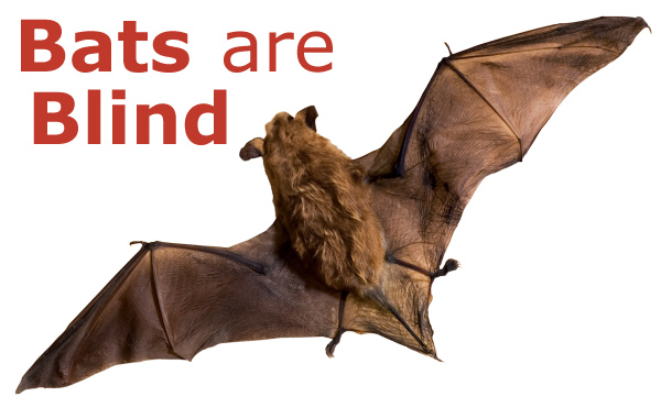 Bats Are Blind Don T Believe That