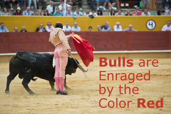 Bulls are Enraged by the Color Red